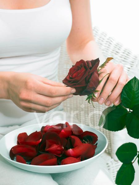Rosenblütenblätter abzupfen